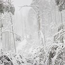 Snowy Trees, Alpine National Park, Victoria, Australia by Michael Boniwell