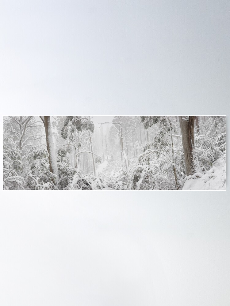 Alternate view of Snowy Trees, Alpine National Park, Victoria, Australia Poster