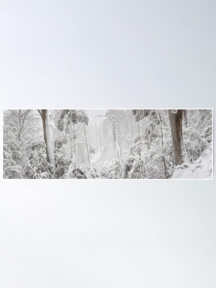 Alternate view of Snowy Trees, Alpine National Park, Victoria, Australia Poster