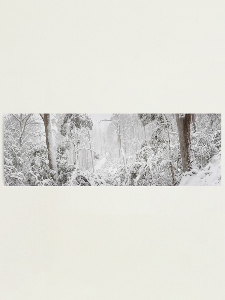 Alternate view of Snowy Trees, Alpine National Park, Victoria, Australia Photographic Print
