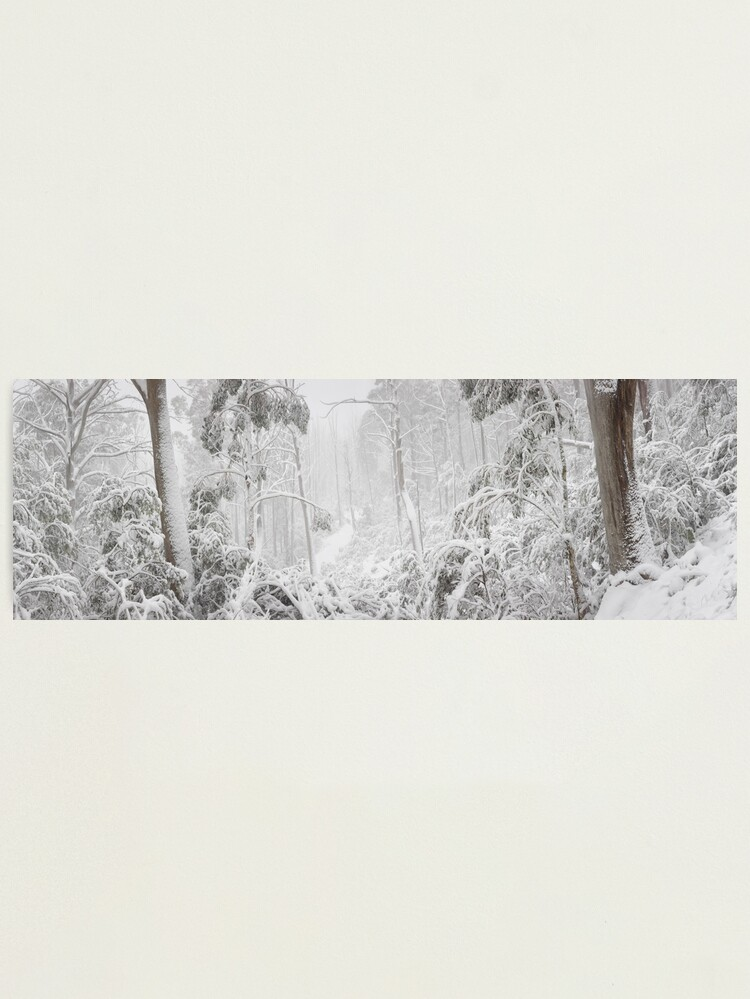 Alternate view of Snowy Trees, Alpine National Park, Victoria, Australia Photographic Print