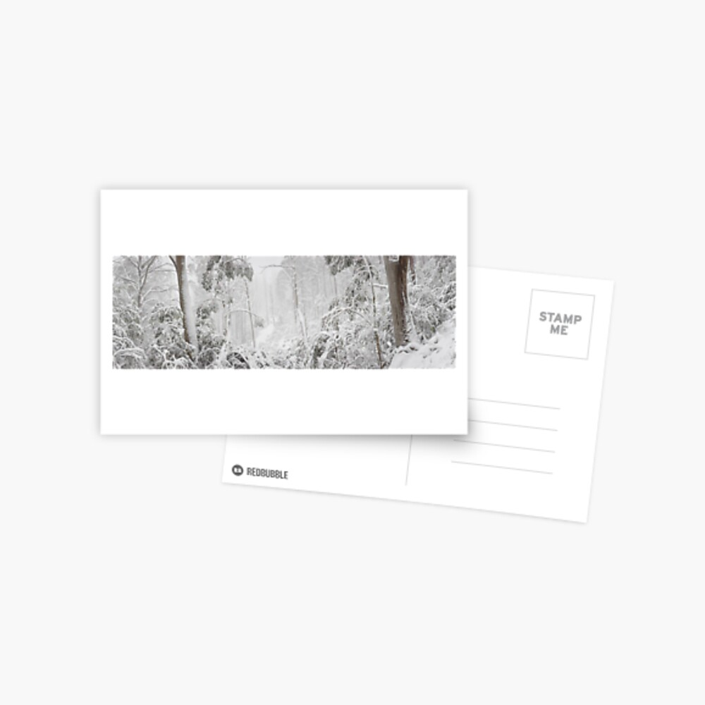 Snowy Trees, Alpine National Park, Victoria, Australia Postcard