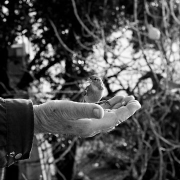 The Hand and the Bird Black and White Photography by signorino