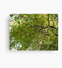 Crab Apple Greens Canvas Print