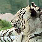 White Tiger by longaray2