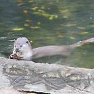 Otters lunch by Ann Biddlecombe