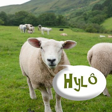 Friendly Welsh sheep says Hylô by funkyworm