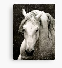 Andalusian Horse Portrait Canvas Print