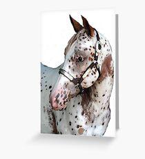Appaloosa Yearling Horse Portrait Greeting Card