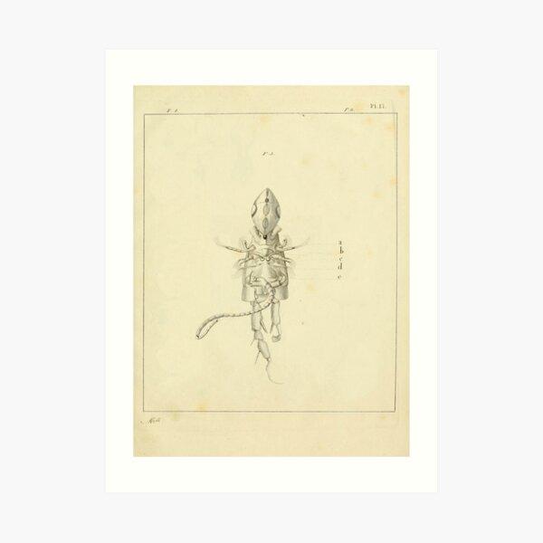 Retro Alien: Nuveri Art Print