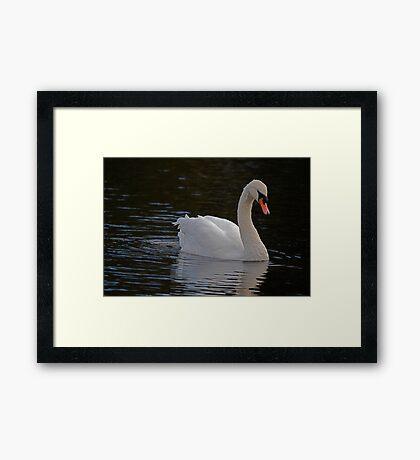 Swan on the Esk Framed Print