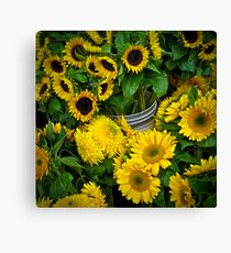 sunlight in a bucket Canvas Print