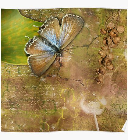 Butterfly & Seed Pods Poster