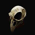 Bird Skull by grafoxdesigns