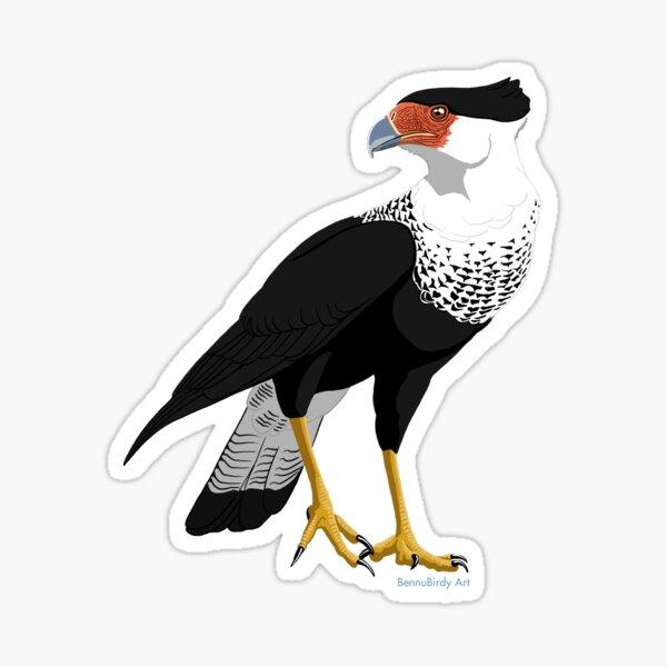 Crested Caracara Sticker