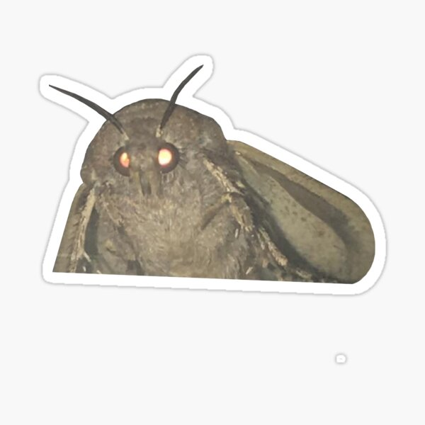 Moth Meme Sticker