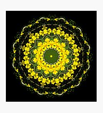 Yellow Blossoms Photographic Print