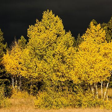 Colorado Storm Clouds Surround Gold by nikongreg