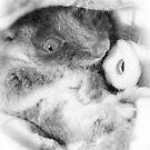 Baby Ringtail Possum by Samantha Cole-Surjan