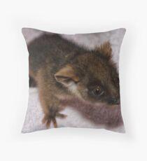 Baby Ringtail Possum Throw Pillow