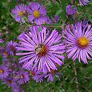 Bee by Barbara Morrison