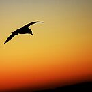 Seagull sunset, over a South Wales beach by Sarmorrow