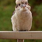 I am just a small bird!! by robynart