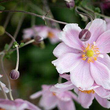 Flowered Beauty by Shendz