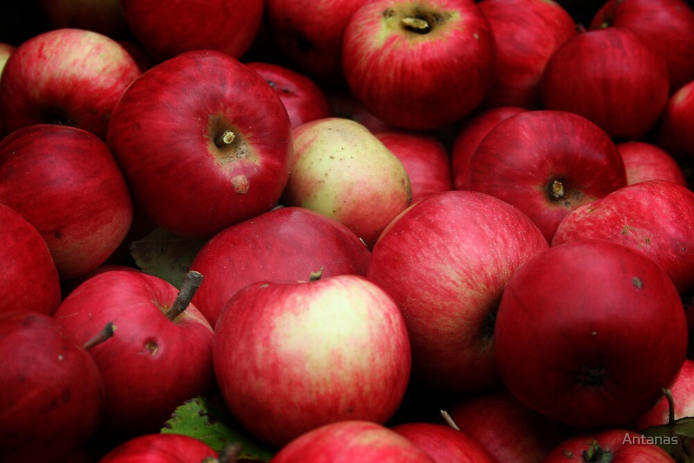 My  eco-friendly   apples from my apples plantation  by Antanas
