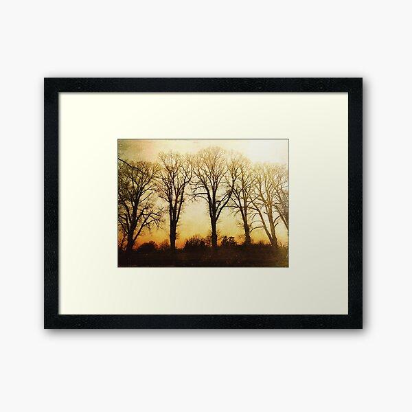Elm Trees at Sunrise Framed Art Print