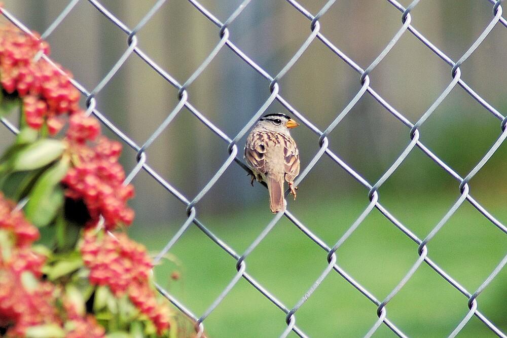 On the Fence by LOJOHA