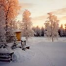 Mother's Yard - Old Homestead in Lapland Finland by Merja Waters