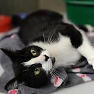 Wilma the cat by AJPPhotography