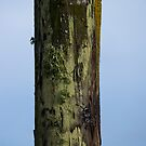 Post with Moss by Josef Grosch