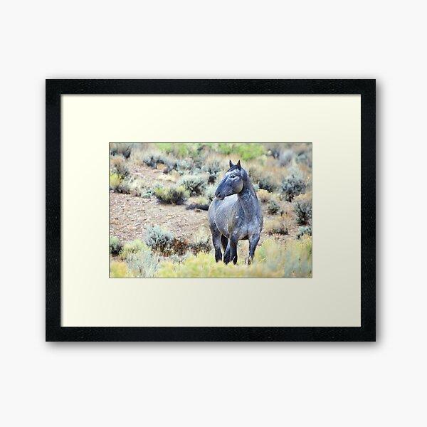 The Watchful Eye - Wild Blue Roan Stallion Framed Art Print