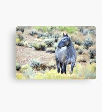 The Watchful Eye - Wild Blue Roan Stallion Canvas Print