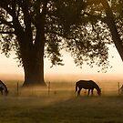 Horses in the Morning Mist by DenverCool