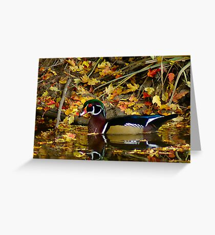 Wood Duck - Kathryn Albertson Park Greeting Card