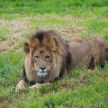 King of the Jungle by GP1746