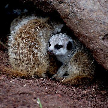 Meerkat Baby by GP1746