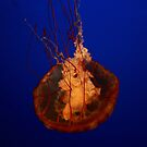 Jelly in Vancouver by mewalsh