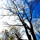 Autumn by Kklove