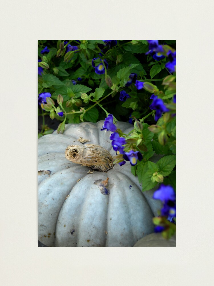 Alternate view of Pumpkin and Purple Flowers Photographic Print