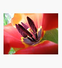 Tulip....as is Photographic Print