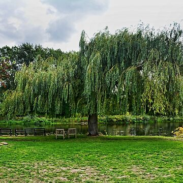 Giant Salix by River Trent by Retiree