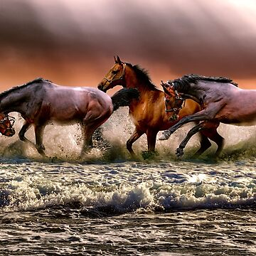 Wild horses by NaCl01