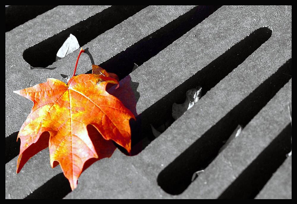 Fall leaf in Greenwood Indiana. by Oscar Salinas