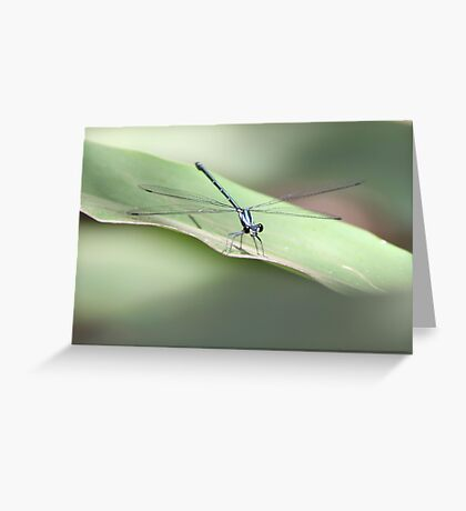Mr Dragonfly Greeting Card