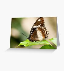 Common Eggfly Butterfly Greeting Card