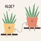 Aloe by Teo Zirinis